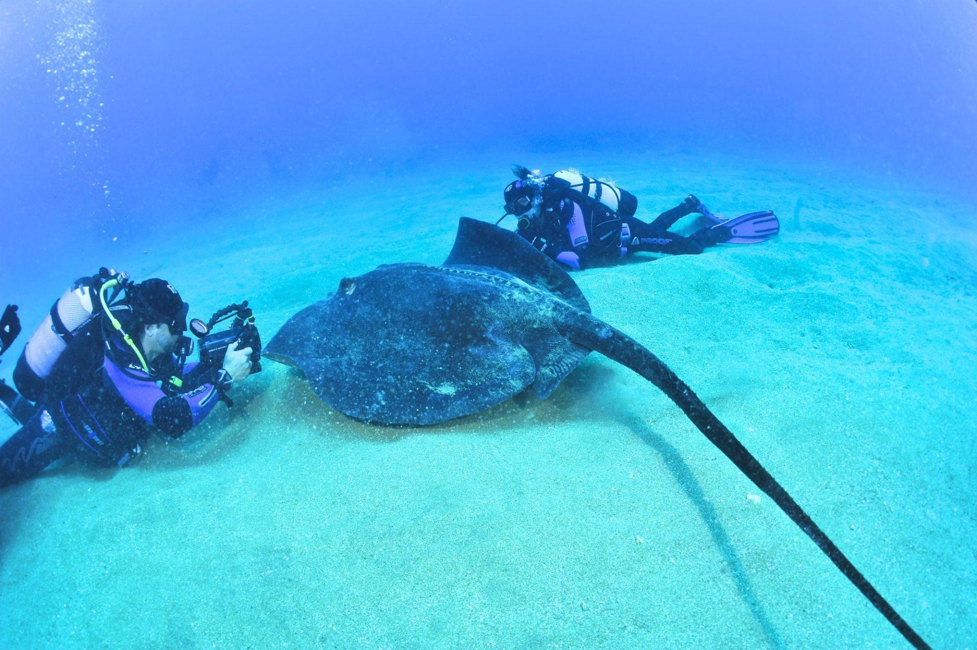 El Acuario Divers